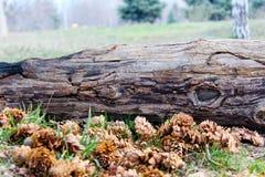 Fiori della natura del paesaggio Fotografie Stock Libere da Diritti