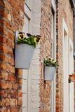 Fiori della pansé in vaso di fiore fuori sulla parete della casa immagine stock