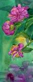 Fiori della peonia dell'acquerello Immagini Stock