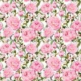 Fiori della peonia, sakura Ripetizione del fondo floreale rosa watercolor fotografia stock