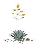 Fiori della pianta dell'agave americana illustrazione vettoriale