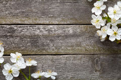 Fiori della primavera fotografia stock