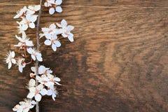 Fiori della primavera Fotografie Stock Libere da Diritti