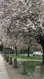 Fiori della primavera Immagine Stock