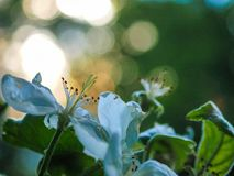 Fiori della primavera al tramonto Fotografia Stock Libera da Diritti