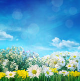 Fiori della primavera con cielo blu Immagine Stock
