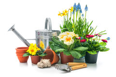 Fiori della primavera con gli strumenti di giardinaggio immagini stock libere da diritti