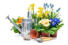 Fiori della primavera con gli strumenti di giardinaggio Fotografia Stock Libera da Diritti