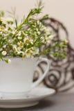 Fiori della primavera con il fondo del cuore Fotografie Stock Libere da Diritti