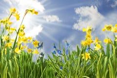 Fiori della primavera con Sunny Blue Sky immagine stock libera da diritti