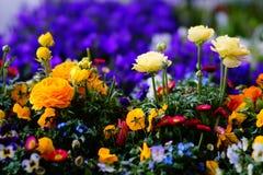 Fiori della primavera con tutti i colori immagini stock libere da diritti