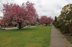 Fiori della primavera di Kitsilano immagini stock
