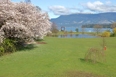 Fiori della primavera di Vancouver fotografie stock libere da diritti