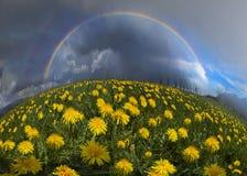 Fiori della primavera e di estate della radura immagine stock libera da diritti
