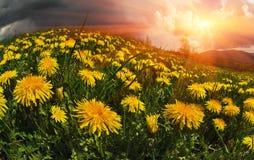 Fiori della primavera e di estate della radura fotografie stock libere da diritti