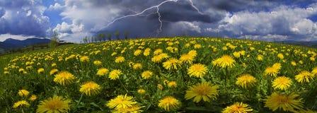 Fiori della primavera e di estate della radura immagini stock libere da diritti