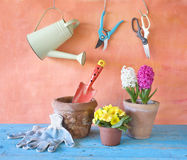 Fiori della primavera e strumenti di giardinaggio Fotografie Stock