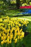 Fiori della primavera gialla, blu e rossa Immagine Stock Libera da Diritti