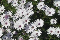Fiori della primavera in giardini spagnoli fotografia stock