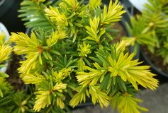 Fiori della primavera in giardino botanico Immagini Stock Libere da Diritti