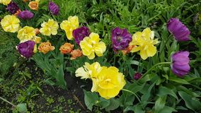Fiori della primavera in giardino botanico Immagini Stock