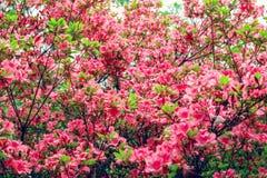 Fiori della primavera in Isabella Plantation, Richmond Park immagini stock libere da diritti