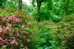 Fiori della primavera in Isabella Plantation, Richmond Park fotografia stock