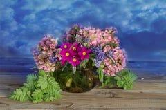 Fiori della primavera isolati su fondo bianco fotografia stock