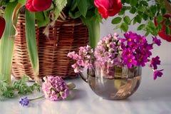Fiori della primavera isolati su fondo bianco immagini stock