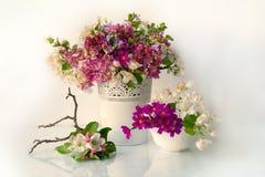 Fiori della primavera isolati su fondo bianco fotografie stock libere da diritti