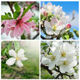 Fiori della primavera messi Immagine Stock Libera da Diritti