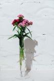 Fiori della primavera messi sul fondo bianco del mattone Fotografia Stock