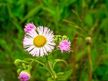 Fiori della primavera nel campo Fotografia Stock Libera da Diritti