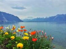 Fiori della primavera nelle alpi fotografie stock