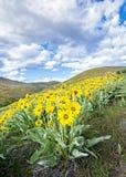 Fiori della primavera nelle colline con cielo blu Fotografia Stock Libera da Diritti