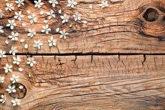 Fiori della primavera su fondo di legno fotografie stock libere da diritti