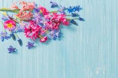 Fiori della primavera su vecchio fondo di legno blu Fotografia Stock