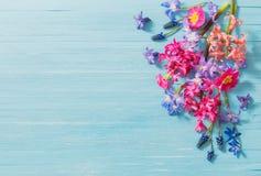 Fiori della primavera su vecchio fondo di legno blu Immagini Stock Libere da Diritti