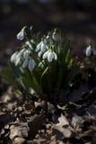 Fiori della primavera in un parco Immagine Stock Libera da Diritti