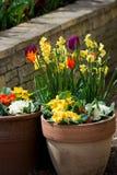 Fiori della primavera in vaso di fiore Fotografia Stock