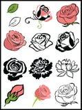 Fiori della Rosa Immagine Stock Libera da Diritti
