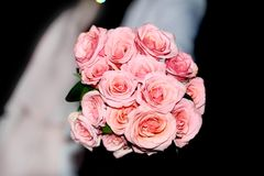 Fiori della Rosa Fotografia Stock Libera da Diritti