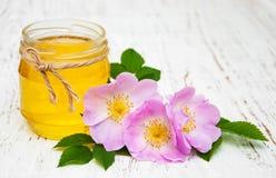 Fiori della rosa canina e del miele Fotografia Stock