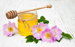 Fiori della rosa canina e del miele Immagine Stock Libera da Diritti