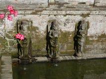 Fiori della rosa del deserto al tempio di Goa Gajah in Bali immagini stock libere da diritti