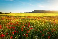 Fiori della sorgente nel campo Bello paesaggio Fotografia Stock