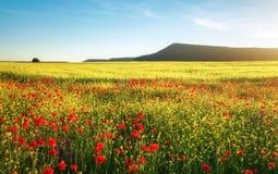 Fiori della sorgente nel campo Bello paesaggio Immagini Stock Libere da Diritti