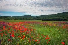 Fiori della sorgente nel campo Bello paesaggio Fotografia Stock Libera da Diritti