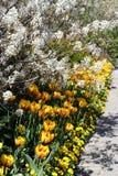 Fiori della sorgente nel giardino 1 fotografia stock libera da diritti