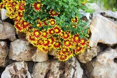 Fiori della sorgente nell'Israele Fotografia Stock